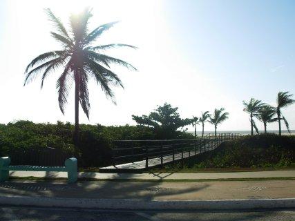 coqueiro-na-praia
